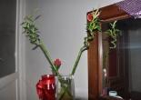 bamboo bitkisi,bambo bakımı,bamboo şansı,bamboo uğuru
