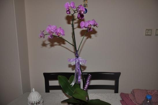 Orkideler,Orkide Çiçeği,orkide çiçeği ofislerin gülü,orkide çiçeği